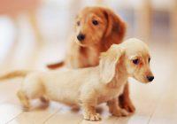 【犬・ネコ向け】2017年お薦め格安ペット保険特集。手頃な掛け金で安心を